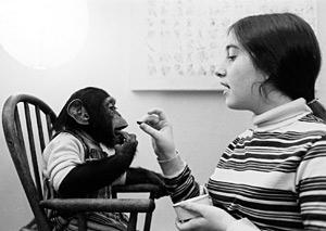 chimpsky.jpg